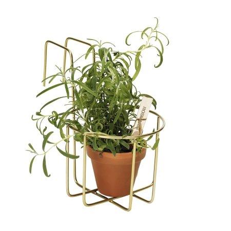Altankasse 1 plante - messing