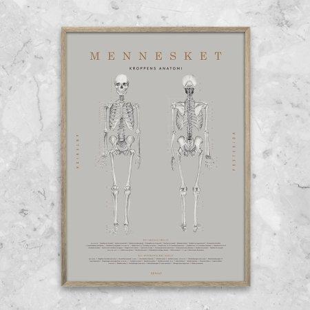 Gehalt plakat Mennesket anatomi - grå