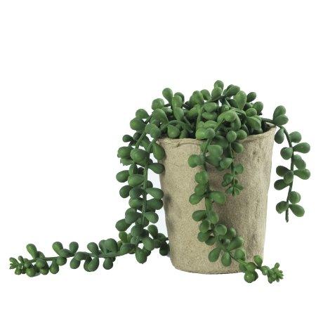Bønne plante - kunstig