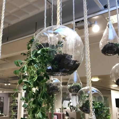 Blomster oph�ng i glas
