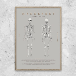 gehalt – Gehalt plakat mennesket anatomi - grå fra fenomen