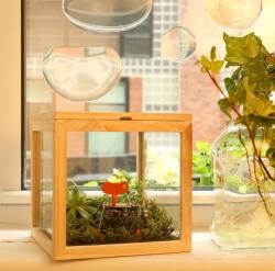 Glas opbevaringskasse fra kikkerland fra fenomen