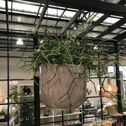 Image of   Bloomingville hængende urtepotteskjuler - brun